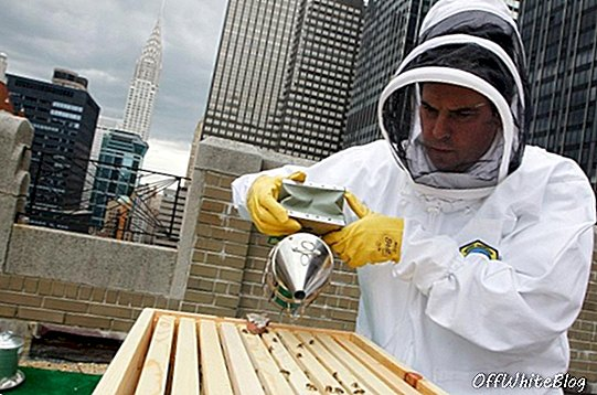 Waldorf-Astoria New York adalah Into Beekeeping