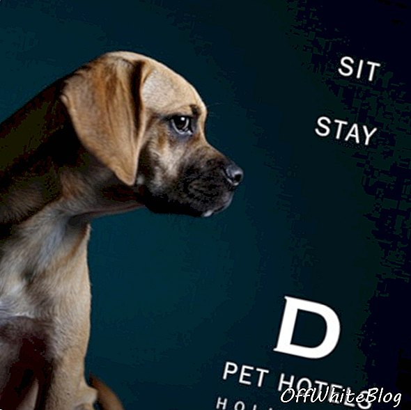 D Pet Hotels - A Luxury Resort & Spa for the Distinguished Dog